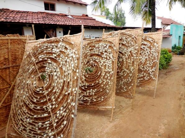 pix7 093 silk worm mats